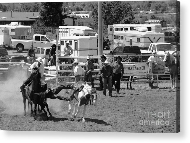 Rodeo Acrylic Print featuring the photograph Steer Wrestling by Susan Chandler