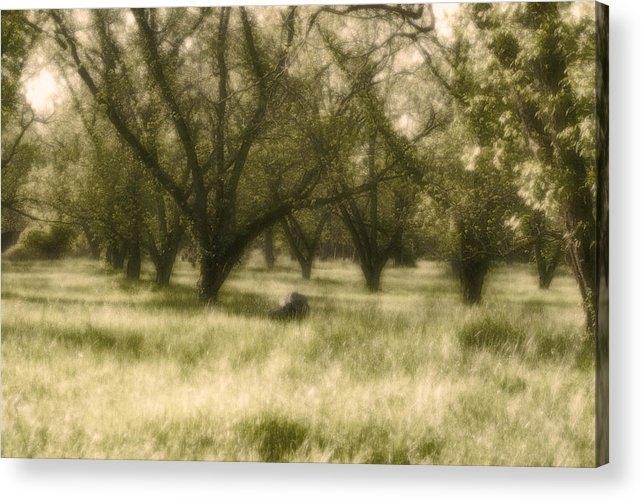 Landscape Acrylic Print featuring the photograph The Orchard by Ayesha Lakes