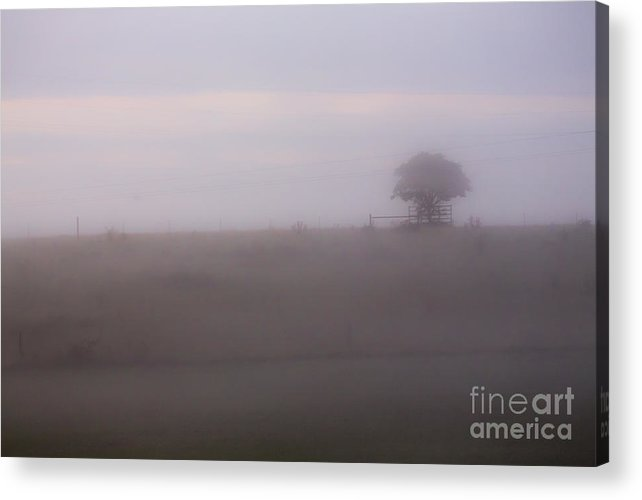 Tree Acrylic Print featuring the photograph Tree in mist in paddock by Sheila Smart Fine Art Photography