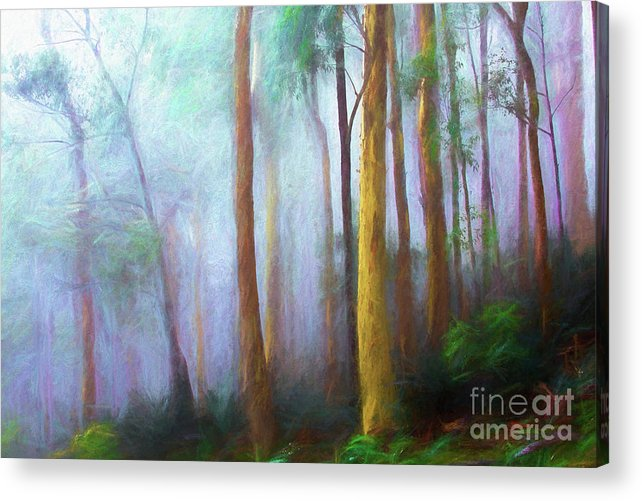 Trees In Mist Acrylic Print featuring the photograph Trees in mist by Sheila Smart Fine Art Photography