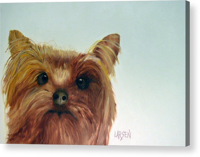 Acrylic Print featuring the painting Yorkshire Terrier by Dick Larsen