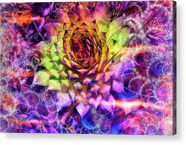 Colorful Acrylic Print featuring the photograph Shrouded Sempervivum by Dana Vallery