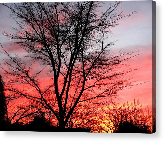 Tree And Sunset. Acrylic Print featuring the photograph Tree and Sunset. by Joyce Woodhouse