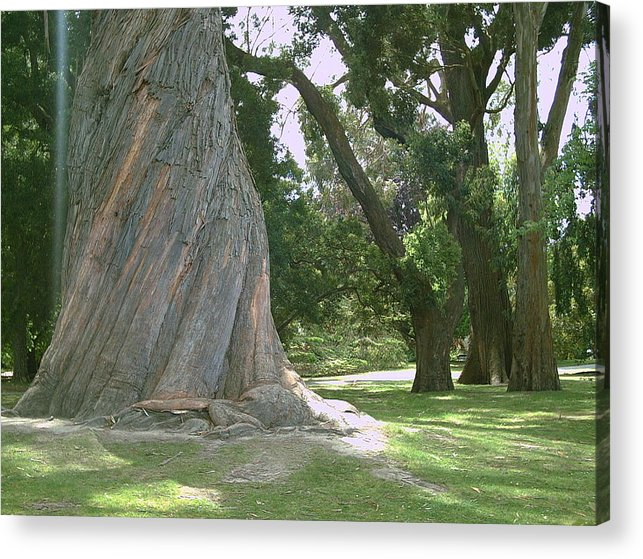 Gum Tree Acrylic Print featuring the photograph Gum Trees by Joyce Woodhouse