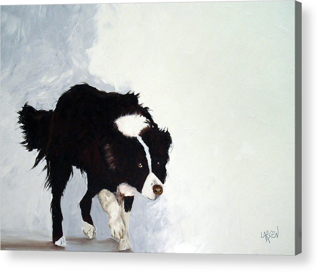 Border Collie Acrylic Print featuring the painting Border Collie by Dick Larsen
