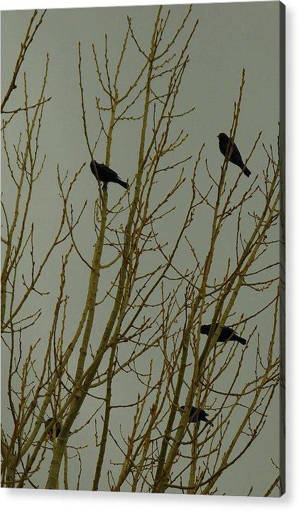 Birds Acrylic Print featuring the photograph Birds by Patrick Short