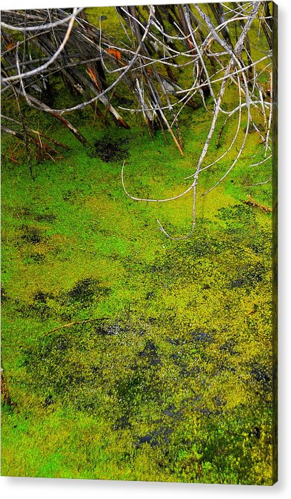 Green Spring Soup Acrylic Print featuring the photograph Green Spring Soup by Patrick Short