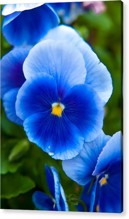 Spring Flowers Acrylic Print featuring the photograph Beautiful Blues by Az Jackson