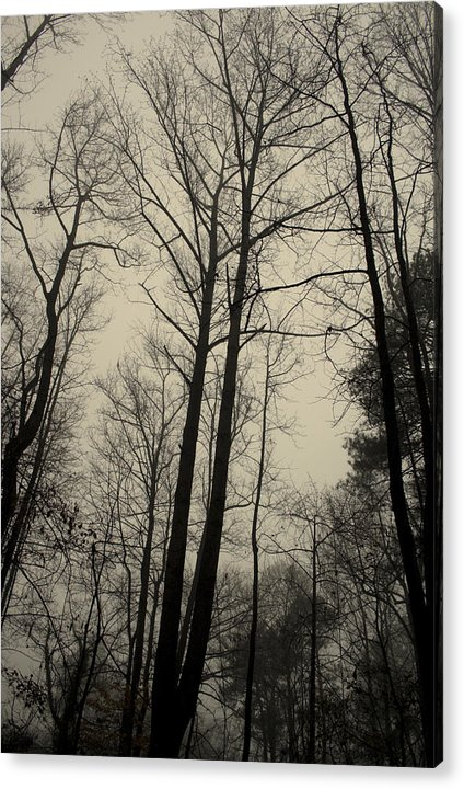 Trees Acrylic Print featuring the photograph Standing Tall by Ayesha Lakes