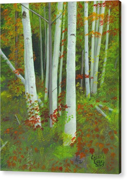 Landscape Acrylic Print featuring the painting Autumn Birches by Laurel Ellis