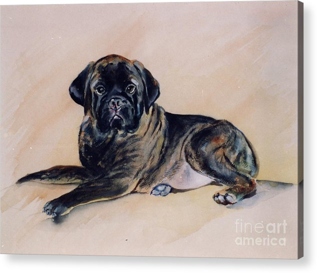 Dog Acrylic Print featuring the painting Sharon by Adele Pfenninger