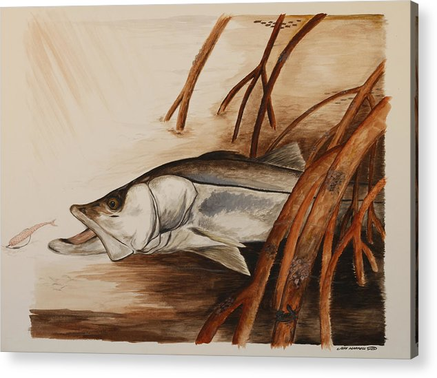 Snook Acrylic Print featuring the painting Snook In The Mangroves by Jeff Harrell