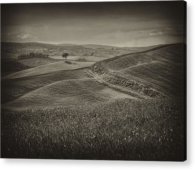 Italy Acrylic Print featuring the photograph Tree In Sienna by Hugh Smith