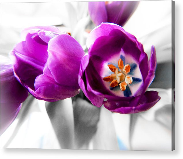 Tulips Acrylic Print featuring the photograph Inside Tulips by Joe Carini