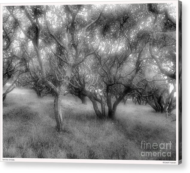 California Landscapes Acrylic Print featuring the photograph Fort Ord Ca Oaks by Carla Hamelin