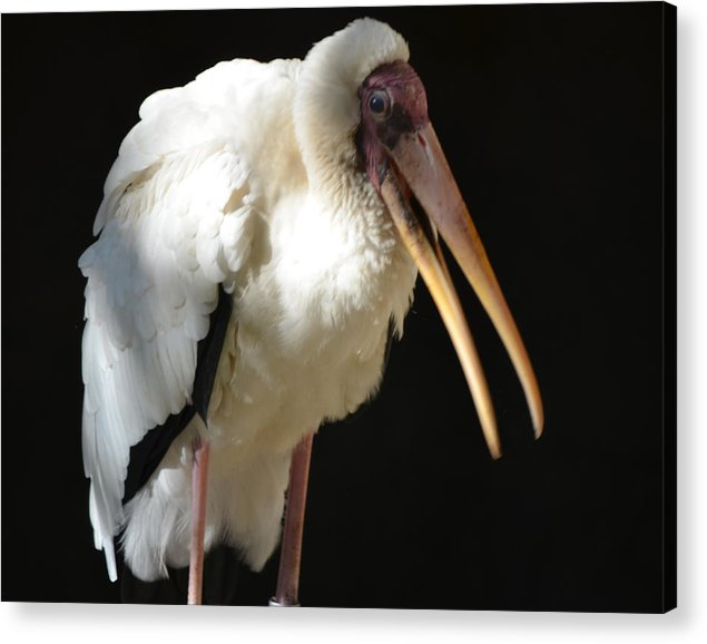 Milk Acrylic Print featuring the photograph Milky Stork by Maggy Marsh