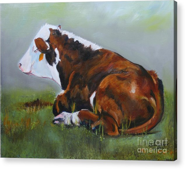 Cattle Acrylic Print featuring the painting Polled Herford Baby 2 by Adele Pfenninger