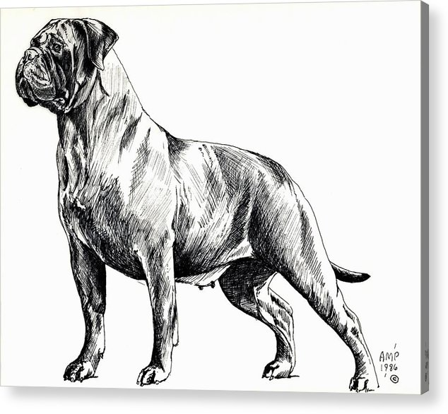 Dog Acrylic Print featuring the painting Brindle Girl by Adele Pfenninger