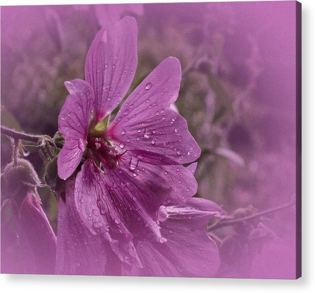 Hardy Hisbiscus Acrylic Print featuring the photograph Vintage Hisbiscus by Richard Cummings