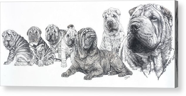 Non-sporting Group Acrylic Print featuring the drawing Growing Up Chinese Shar-pei by Barbara Keith