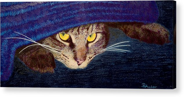 Maine Coon Cat Acrylic Print featuring the drawing Hide And Seek by Brent Ander