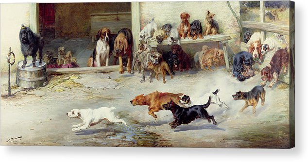 Race; Dog; Breeds; Jack Russell; Poodle; Dachshund; Bloodhound; Boxer; Cairn; Springer Spaniel; Pug Acrylic Print featuring the painting Hot Pursuit by William Henry Hamilton Trood