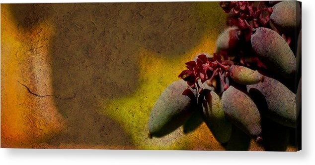Fruit Acrylic Print featuring the photograph Who Knows by Trish Tritz