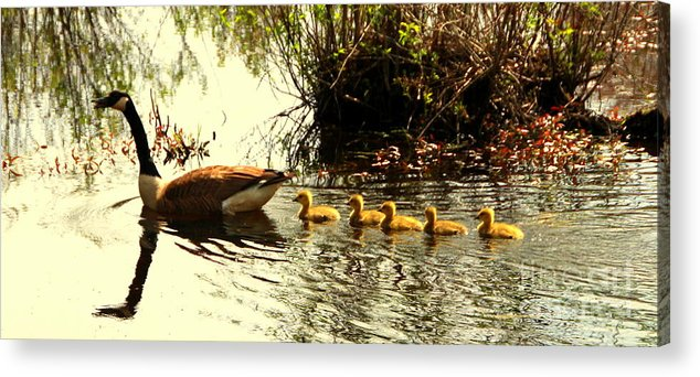 Birds Acrylic Print featuring the photograph Follow Mom by Lennie Malvone