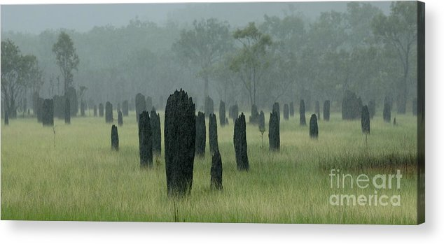 Termites Acrylic Print featuring the photograph Magnetic Termite Mounds by Bob Christopher