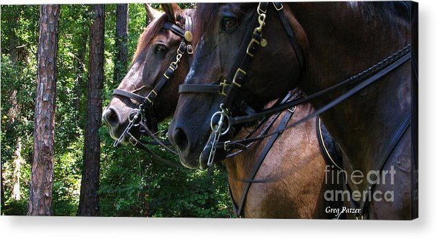 Patzer Acrylic Print featuring the photograph Standing Around by Greg Patzer