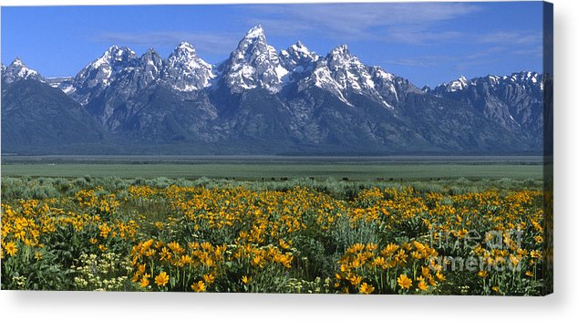 Grand Teton Acrylic Print featuring the photograph Grand Teton Summer by Sandra Bronstein