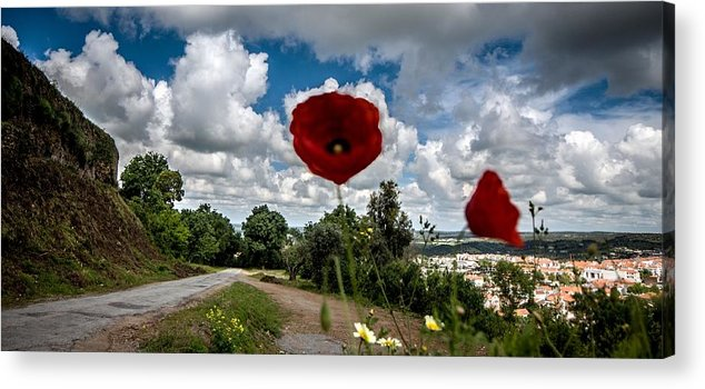 Agriculture Acrylic Print featuring the photograph The Poppies Show You The Way by Georgina Noronha