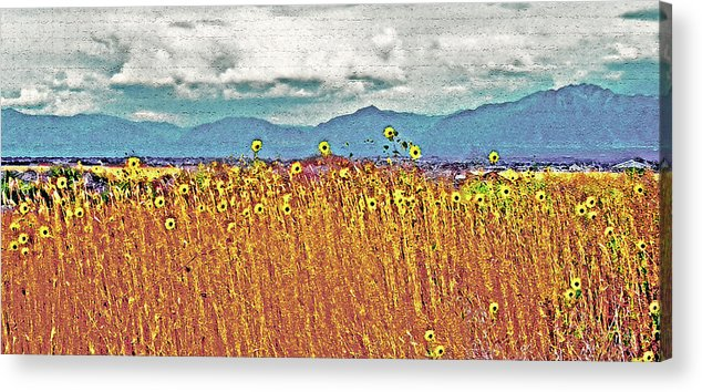 Fields Acrylic Print featuring the photograph Sunflower Field 1 by Steve Ohlsen