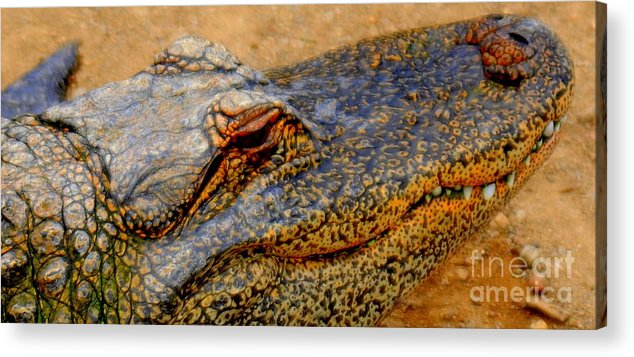 Gator Acrylic Print featuring the photograph Gator by Patrick Short