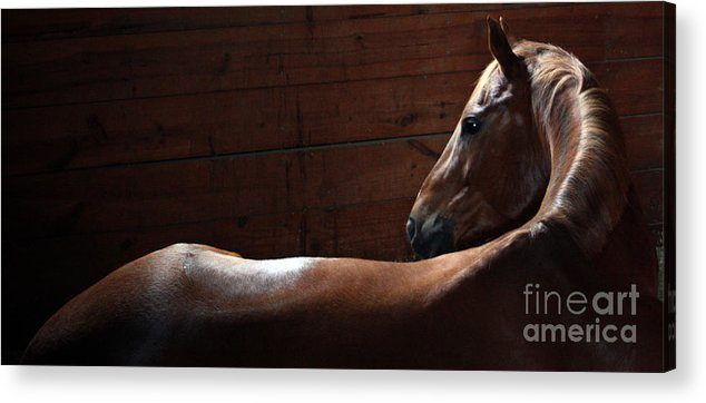 Horse Acrylic Print featuring the photograph Barn Morning by Lauren Nicholson