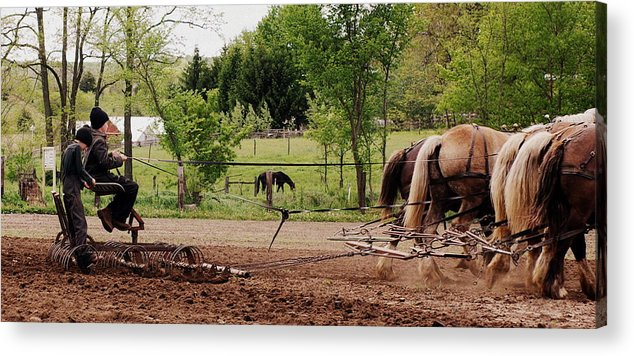 Amish Acrylic Print featuring the photograph Spring Planting by Linda Mishler