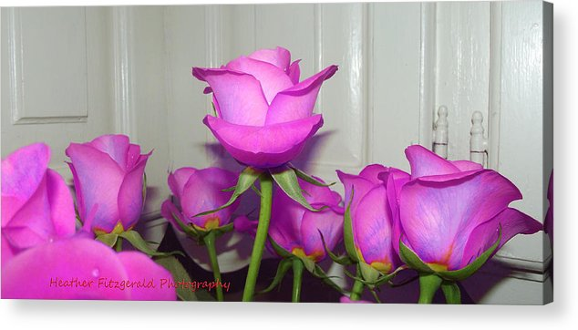 Purple Acrylic Print featuring the photograph Purple Roses by Heather Fitzgerald