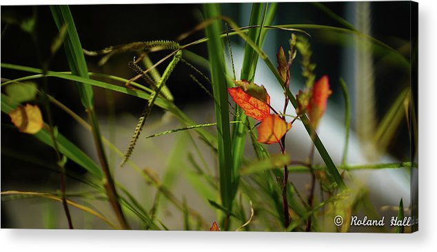 Wild Acrylic Print featuring the photograph Wild Plants by Roland Hall
