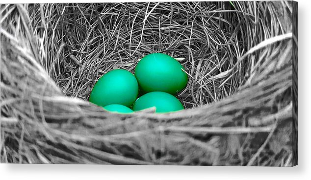 Robin Acrylic Print featuring the photograph Robin's Nest Selective by Valentino Visentini