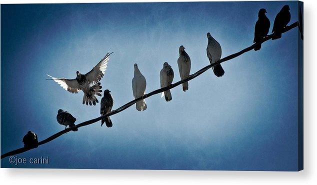 Bird Acrylic Print featuring the photograph Birds On A Wire by Joe Carini