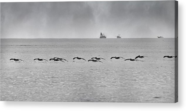 Pelican Acrylic Print featuring the photograph Destination by Betsy Knapp