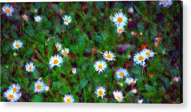 Digital Photograph Acrylic Print featuring the photograph Field Of Daisys by David Lane