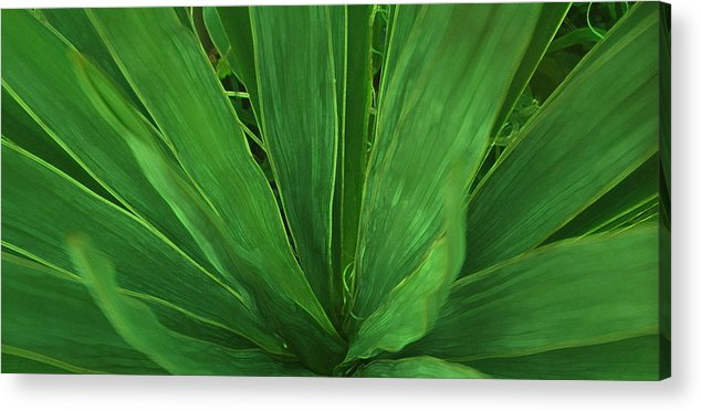 Green Plant Acrylic Print featuring the photograph Green Glow by Linda Sannuti