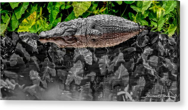 American Acrylic Print featuring the photograph Let Sleeping Gators Lie - Mod by Christopher Holmes