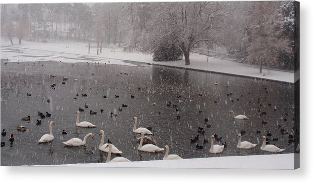 Nature Acrylic Print featuring the photograph Snow Over Swan Lake by Valia Bradshaw