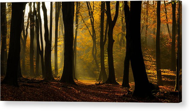 Forest Acrylic Print featuring the photograph Speulder Panorama by Martin Podt