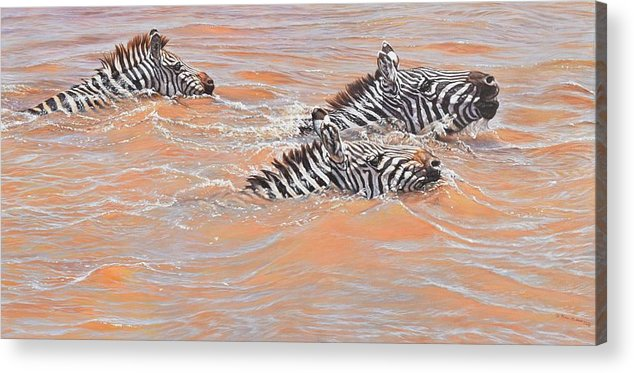 Wildlife Paintings Acrylic Print featuring the painting This Way Son by Alan M Hunt