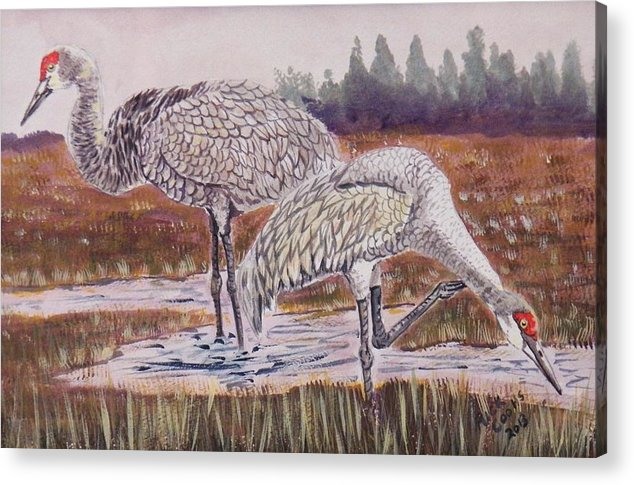 A Pair Of Sandhill Cranes Feeding In A Flooded Field. Acrylic Print featuring the painting Sandhill Cranes Feeding by Richard Goohs