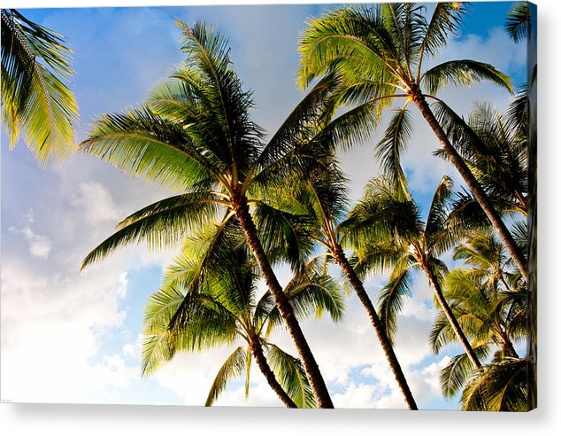 Blue Sky Acrylic Print featuring the photograph Palm Trees At Twilight by Joe Carini