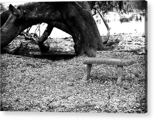 Bench By The Tree Acrylic Print featuring the photograph Bench By The Tree by John Rizzuto